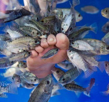 Leczniczy zabieg fish pedicure. Źródło fotografii: doctordaliah.wordpress.com