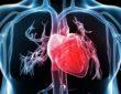 Tachykardia i bradykardia - objawy oraz przyczyny arytmii serca. Fotografia: squarespace.com.