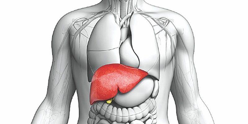 Choroba Wilsona - w początkowym stadium nadmiar miedzi lokalizuje się przede wszystkim w wątrobie. Fotografia: bluemix.net.