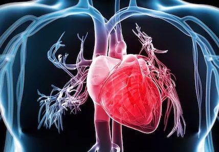 Objawy i przyczyny kardiomiopatii. Fotografia: telegraph.co.uk.